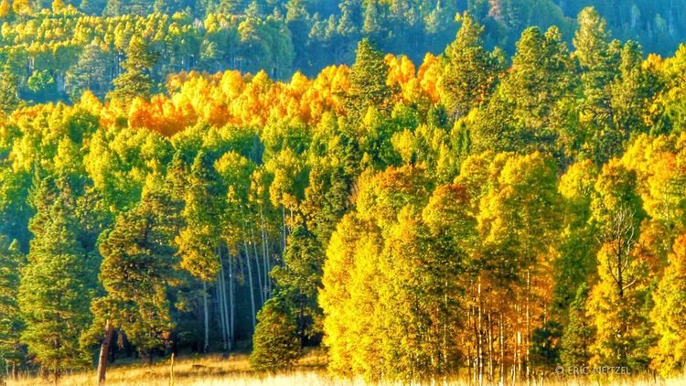 Another magical afternoon in the White Mountains of Eastern Arizona #whitemountains #arizona #visitarizona #fallcolors #forestservice #apachesitgreavesnationalforest #abc15 @arizonahig Hello World hways Sunset #sun #clouds #skylovers #sky #nature #beautifulinnature #naturalbeauty #photography #landscape