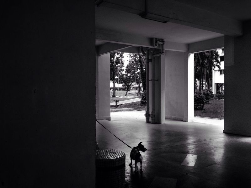 Blackandwhite Street Photography Streetphotography Dog Void Deck