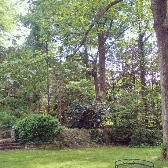 Jungle Backyard with a Guitar Soundtrack