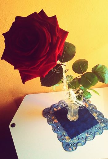 My Birthday Rose🌹 Flower The Best Gift <3 21 Years Have A Nice Day♥