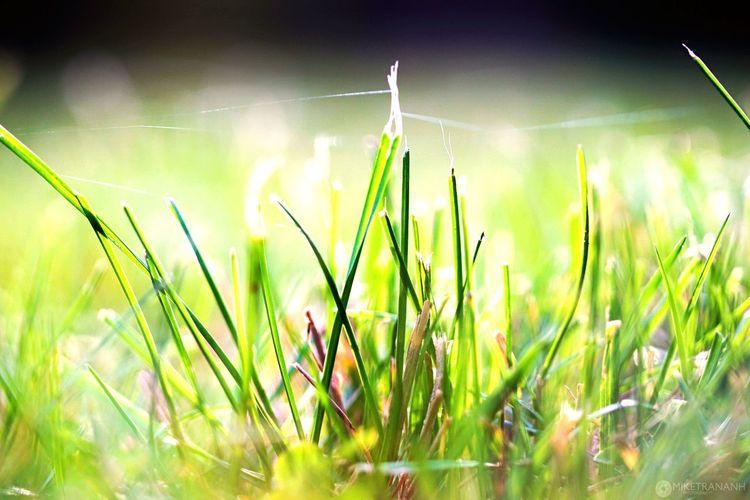 Deceptively Simple Grass Photooftheday Awesome_shots Spiderweb Zoomthelife Zoomnature Global_hotshotz Nature_best_shots