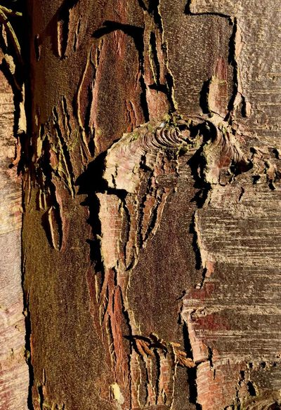 Bark Textures And Patterns Spring Is Here 🌞 Nature's Best IPhone 6+ Iphonephotography Textures