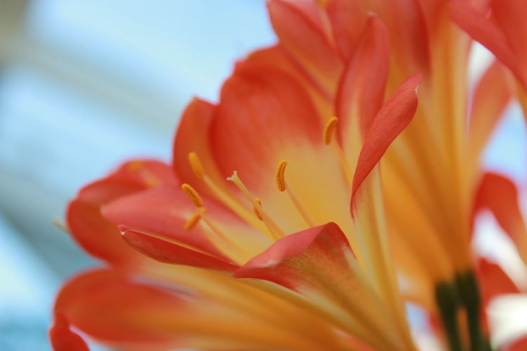 Flowering Plant Flower Plant Beauty In Nature Close-up Inflorescence Flower Head Nature Orange Color