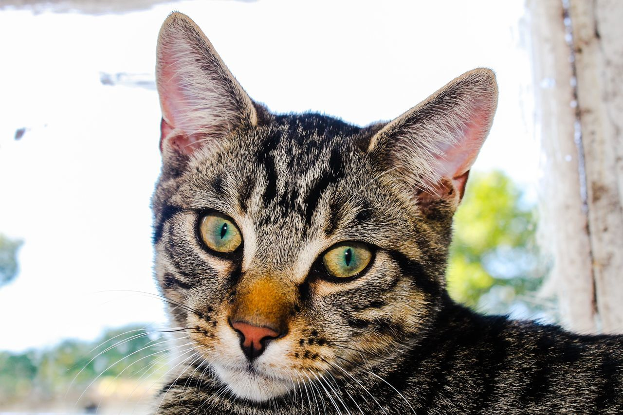 Close-Up Portrait Of Tabby Outdoors