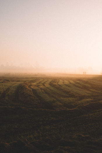 my sleeping cycle has been so bad lately... but at the same time i never miss these magical sunrises, how do you normally fix your sleep cycle? i need tips haha 😴 Early Morning The Netherlands Travel Destinations Foggy Foggy Morning EyeEm Nature Lover Rural Scene Tranquility Yellow Occupation Plant Freshness Farm Cutting Growth Grass Garden Blooming Natural Pattern Insomnia Agriculture Field Nature Crop  No People Landscape Outdoors Rural Scene Cereal Plant Beauty In Nature