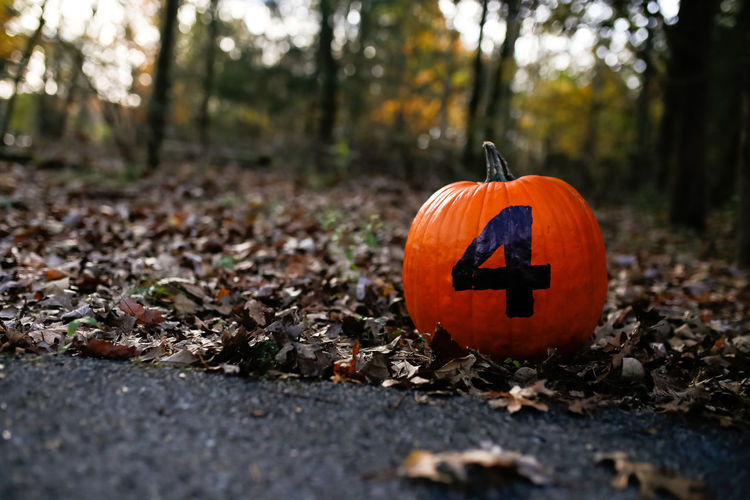 Pumpkin with number 4 sitting in fall leaves Halloween Celebration Pumpkin Autumn Land Orange Color Forest Plant Jack O' Lantern Leaf Day Nature Outdoors No People Selective Focus Change Fall Fall Beauty Fall Colors Autumn colors Autumn Leaves Autumn