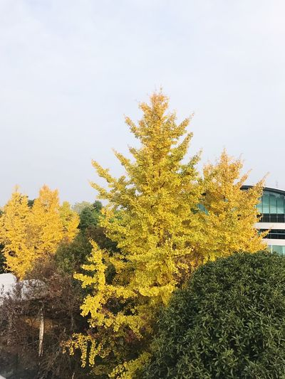 Plant Sky Tree Nature Growth Yellow No People