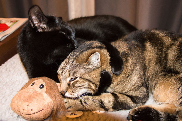 Best buddies cuddling Animal Themes Cat Lovers Catoftheday Cats Cats Of EyeEm Cats4vdB Cat♡ Domestic Animals Feline Mammal No People Pets