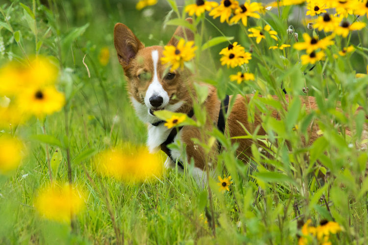 View of dog on yellow flower