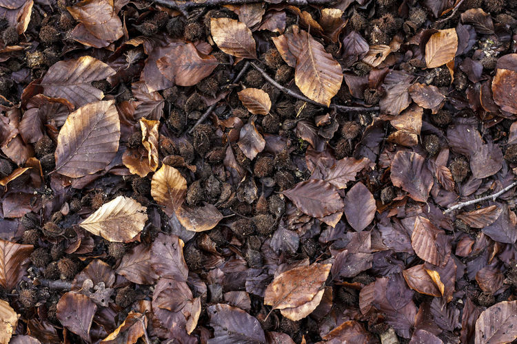 Turning over a new leaf Winter Wintertime Leaf Leaflitter Brown Browntones Shades Of Winter Backgrounds Textured  Abundance Pattern Large Group Of Objects No People Nature Close-up Outdoors