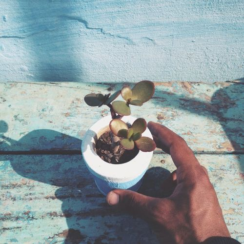 Plant Colors Human Amour ❤ IPhone Life