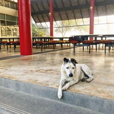 Dog Pets One Animal Animal Themes Domestic Animals Day Sitting EyeEmNewHere