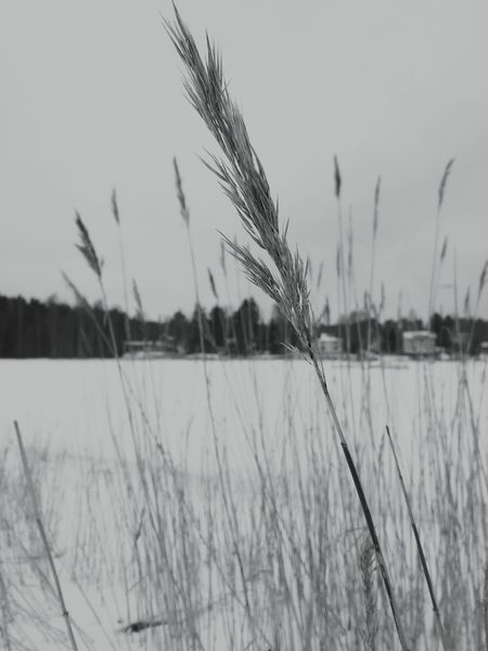 Growth Plant Nature Water Tranquil Scene Winter No People Outdoors Beauty In Nature Cold Temperature Snow Day Hey  Grass Rural Scene Frozen Sea