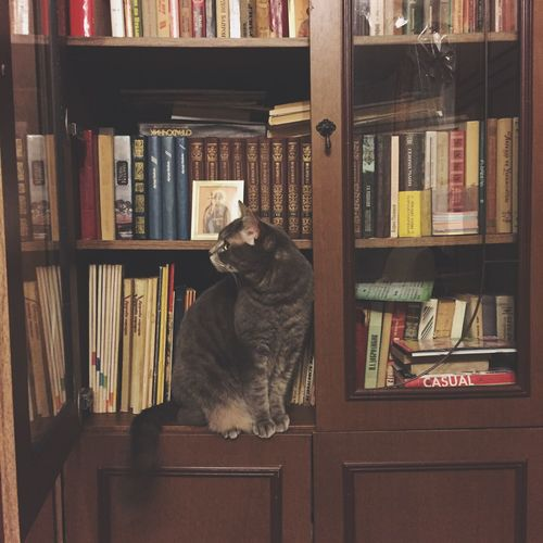 No People Book Bookshelf Education Shelf Library One Animal Learning Indoors  Literature Portrait Large Group Of Objects Bookstore Pets Compact Disc Animal Themes Wisdom Day Cat going to pass an exam EyeEmNewHere
