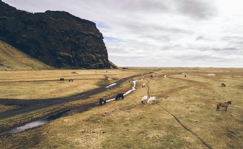 Mammals grazing on grass against sky