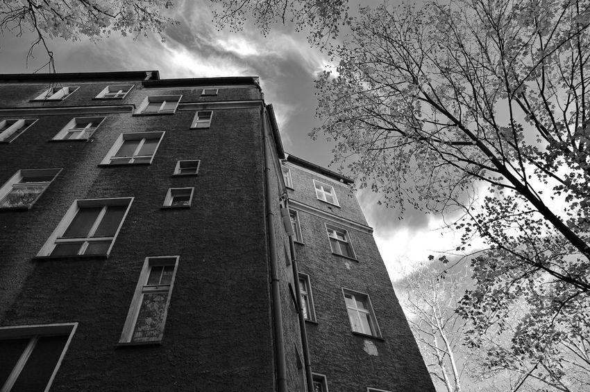Altbau Architecture Autumn Baumstamm Berlin Built Structure City Cloud - Sky Day Haustier Herbst Himmel No People Outdoors S/w Portrait Sky Tree Trzoska Wolken