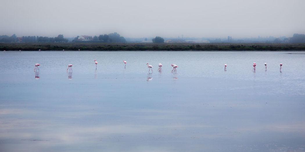 Birds in lake against sky