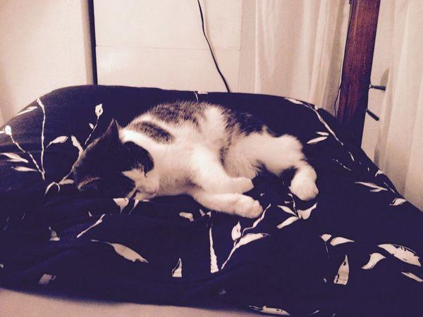 Justchilling Mycat ❤️ Haveaniceday ?✌️