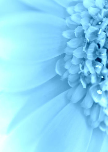 Soft Light Blue Flower Flower Collection Flower Head Flower Photography Flowers Flowers, Nature And Beauty Softness Spring Spring Flowers Springtime