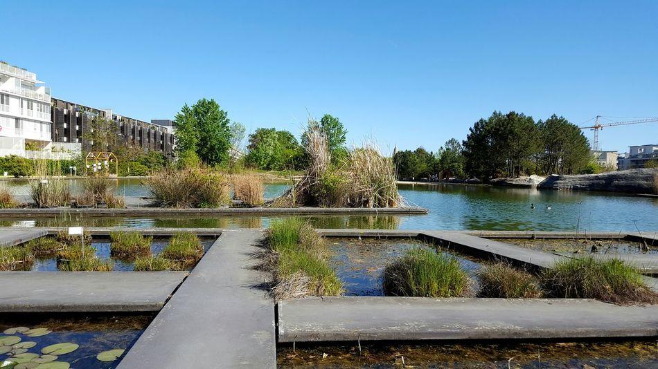 Botanical Garden Aquatic Plants Water Reflection Nature No People Outdoors Bordeaux Jardin Botanique Neighborhood Map