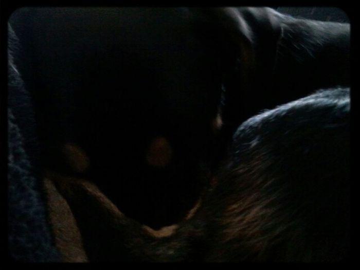 mein hund versteckt sich gern im schlaf XD