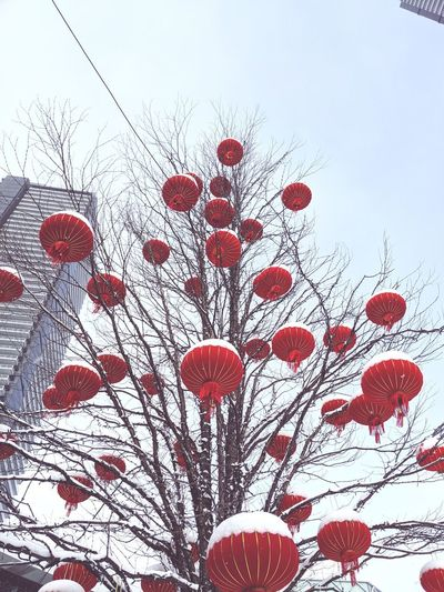 Low angle view of lanterns hanging on bare tree against sky