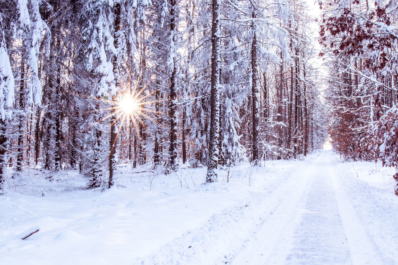 snow, cold temperature, winter, tree, plant, beauty in nature, white color, tranquil scene, land, nature, tranquility, scenics - nature, covering, no people, forest, non-urban scene, day, direction, frozen, snowing, outdoors, extreme weather, lens flare, snowcapped mountain, blizzard