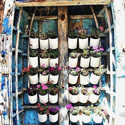 Alibeyisland Flowers