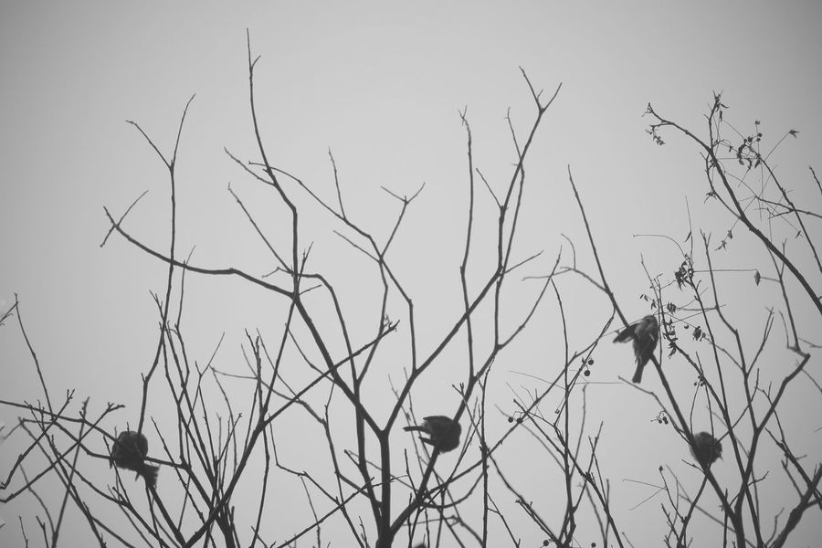 bird and branch EyeEm Selects EyeEmNewHere The Week On EyeEm Outdoors Bird Birds Animals In The Wild Animal Branch Tree Nature Beauty In Nature Black And White Black And White Photography Branches Of Trees Minimalist Plant Mix Yourself A Good Time Pet Portraits Been There. Lost In The Landscape Perspectives On Nature Black And White Friday Crafted Beauty AI Now