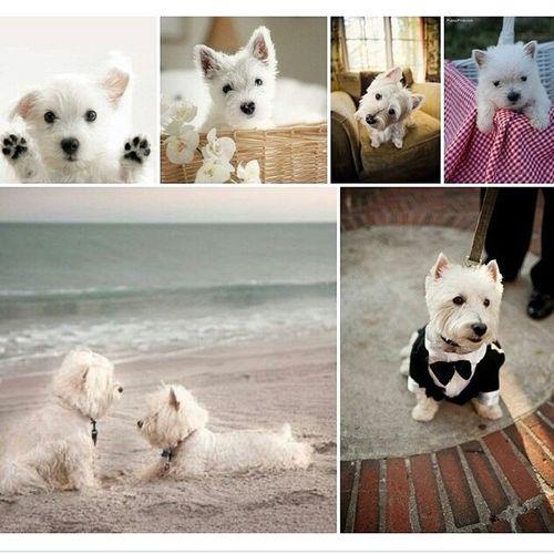 Милости. Вот что-то взгруснулось, а тут такие милости попались на глаза:-) собаки милость милые фото настроение вестик dog cute like love