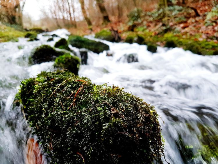 Terraria Water Nature Long Exposure Flowing Water Beauty In Nature Motion River Forest Tree Day Outdoors Tranquility Scenics Freshness Rapids River Stream Mossy Stone Moss Stones Rapid Rushing Water Close-up No People Splashing