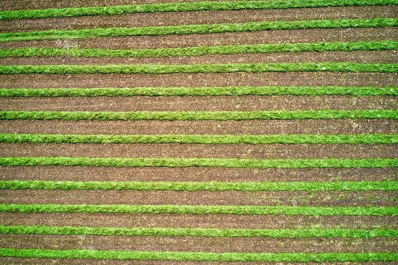 Italy, Mantua: fields Agriculture Color Green Day Day Light Day Time Daylight Daytime Drone  Field From A Distance From Above  High Angle View Horizontal Italy Landscape Landscapes Lines Looking Down Mantova Mantua Nature No One No People Nobody Outdoor Outdoors Outdoors Parallel Spring Spring Season Springtime Tracks Vegetation Aerial View Drone Photography Crop  Backgrounds Pattern Green Color Full Frame Land Rural Scene Grass Farm Plant Growth Environment Crop  Beauty In Nature