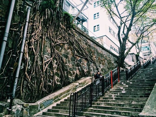 R o o t. HongKong Streetphotography Street Photography Tree Tree Roots  Stairways Stairs Wall HollywoodroadHk IPhoneography GworraHK Eyeemphotography Eyem Gallery EyeEm Gallery