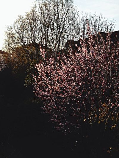 Spring Whispers Of Spring