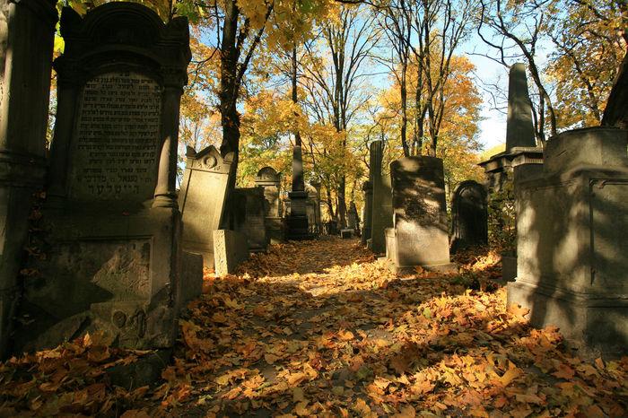 Jewish cemetery, Warsaw, Poland Autumn Cemetery Jewish Jewish Cemetery Judaism Kirkut Poland Tombstone Varsovia Warsaw Warszawa