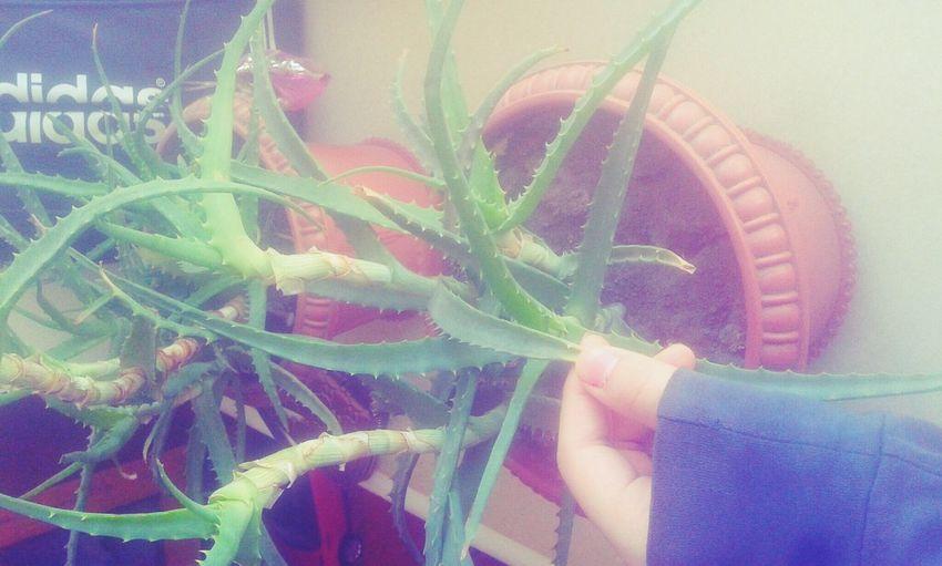 Growing. Flower Is Goodforourhealthy