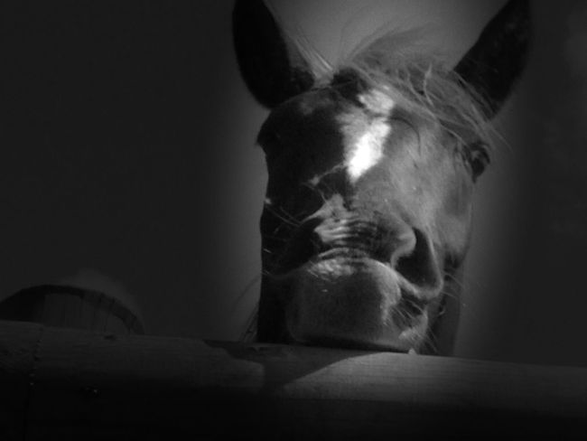 Horse I Love Horses Horses Black And White