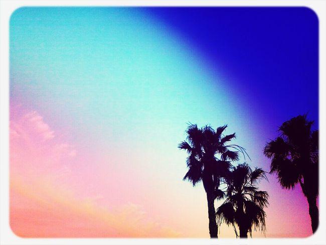 Palm trees! Relaxing Taking Photos Enjoying Life Hanging Out