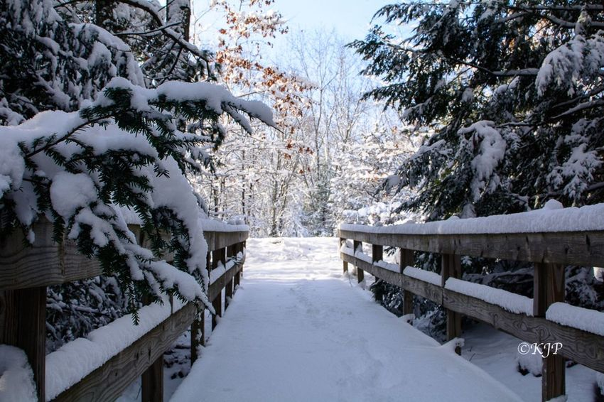Bridge Snowflake Snow Cold Temperature Weather Nature Tree Scenics