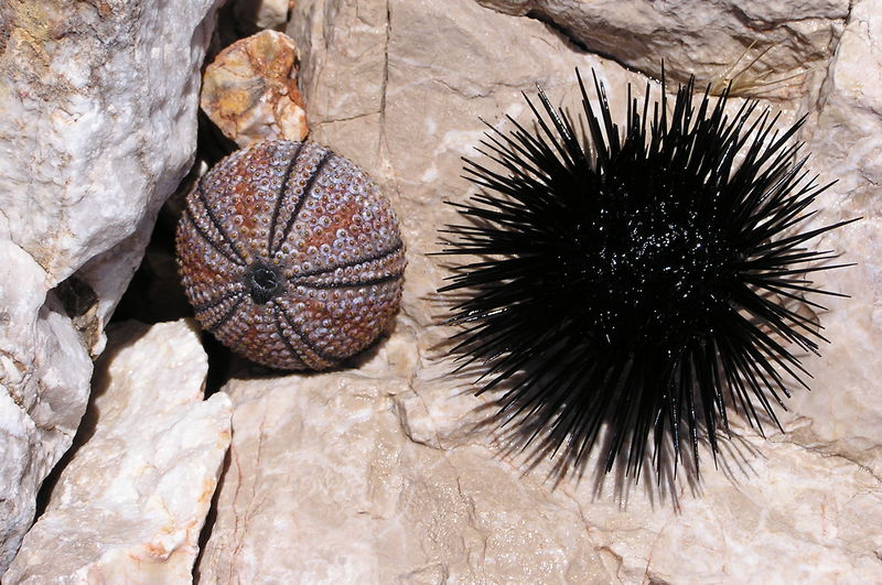 Dead And Alive Nature Sea Urchin