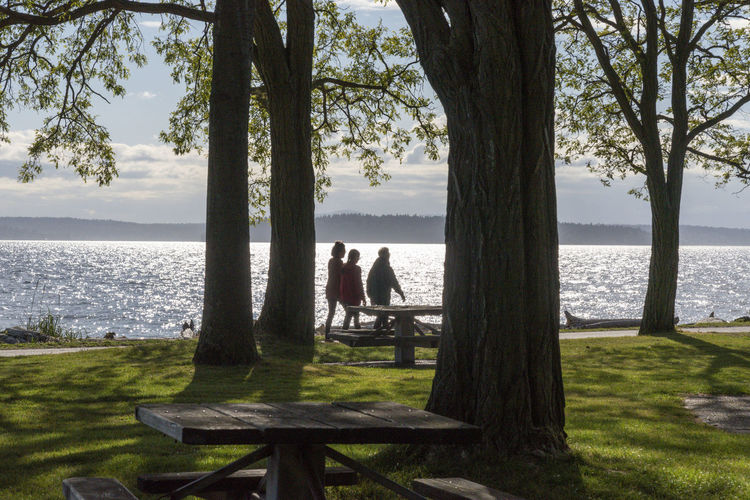 Rear view of people sitting on bench by tree