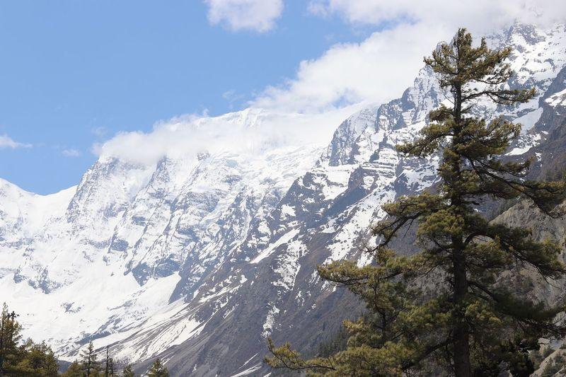 ACT Nepal Tree