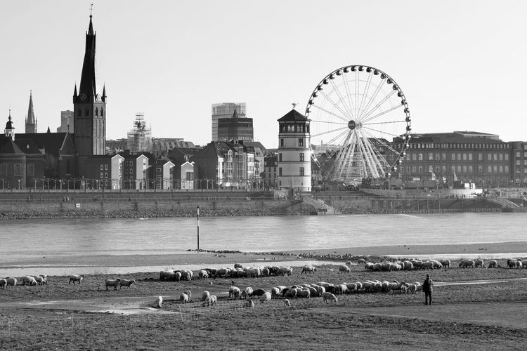 Düsseldorf, Germany Burgplatz City Famous Place Ferris Wheel Outdoors Rhein Rheinufer Rhine River Schafe Schlossturm Schlossturm Düsseldorf Sheep Water Wheel Of Vision Lost In The Landscape