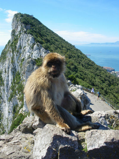 Gibraltar Views Top Of The Rock Nature Animal Themes Animals In The Wild Monkey Primate Mammal Day No People Sea Archival Low Angle View Outdoors Baboon Sky