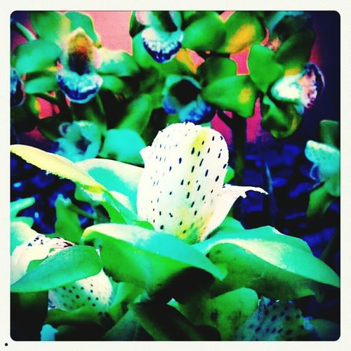 Flower Flowerporn Colorful Colors