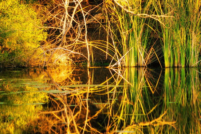 Outdoors No People Nature Grass Scenics Day Growth Beauty In Nature Tree Water Water Reflections River San Diego River