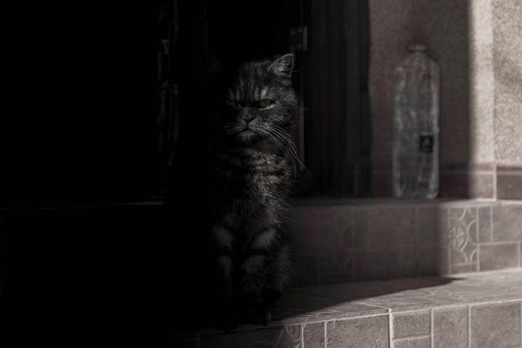 Cat sitting in corridor