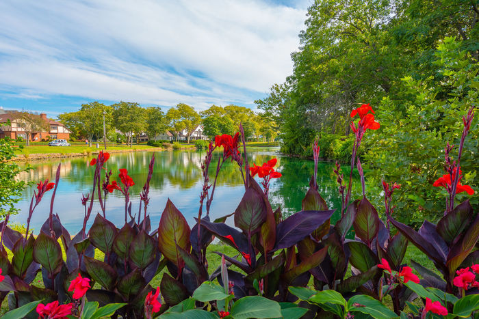 Flowers by the Lake Beauty In Nature Day Destination Resort Flower Fragility Freshness Green Color Growth Lake Leaf Nature No People Outdoors Plant Scenics Sky Spring Lake Beach New Jersey Usa Tranquility Tree Water