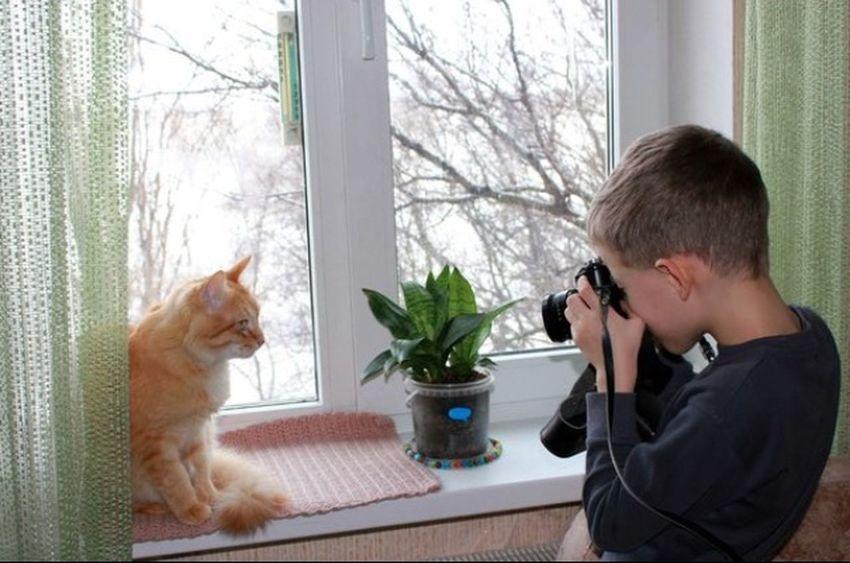 Cat Friends рыжий кот Áfonya Афоня Afonsiko Cats Cat♡