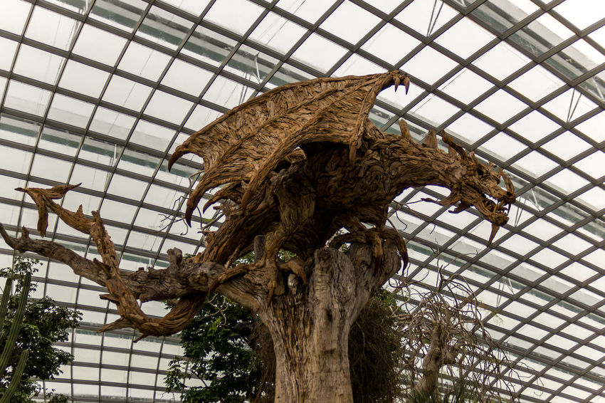 Dragon Animal Themes Branch Close-up Day Growth Indoors  Low Angle View Nature No People Tree